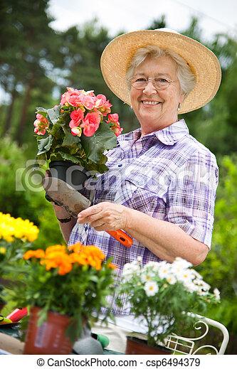 mulher sênior, jardinagem - csp6494379