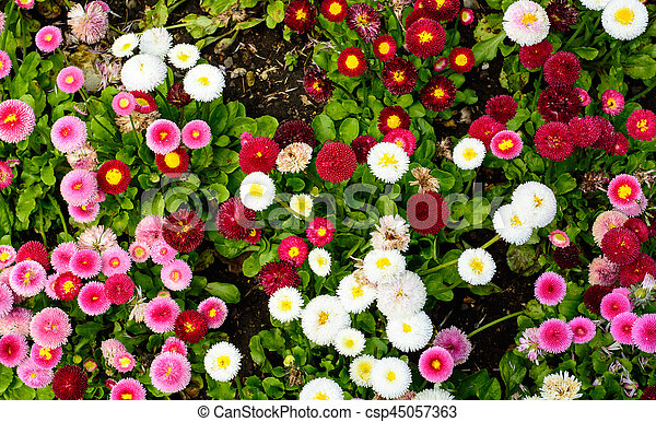 Multi color daisy flowers in spring flowers