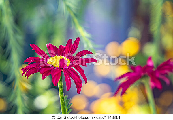 Multicolored flowers on green meadow in forest. Flying bees and butterflies complements the beauty and diversity of nature - csp71143261