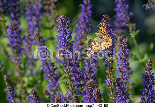 Multicolored flowers on green meadow in forest. Flying bees and butterflies complements the beauty and diversity of nature - csp71143150