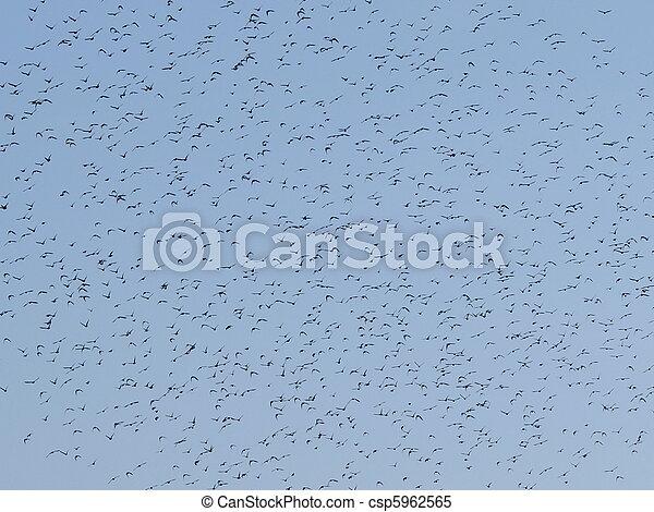 Flock of birds - csp5962565