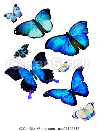 Flock de mariposas - csp23122317