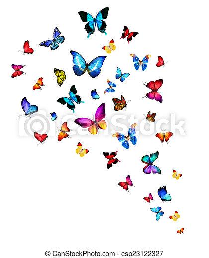 Flock de mariposas - csp23122327