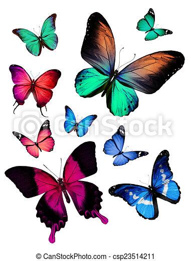 Flock de mariposas - csp23514211