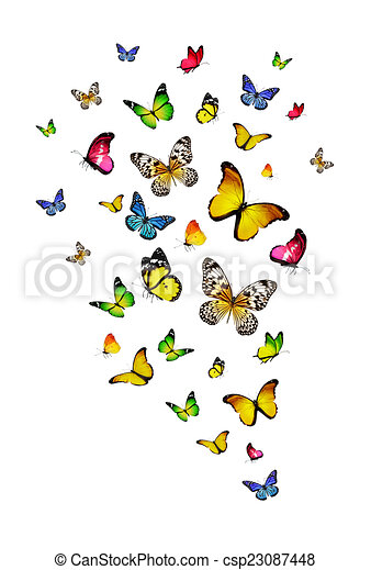 Flock de mariposas - csp23087448