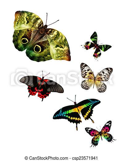 Flock de mariposas - csp23571941