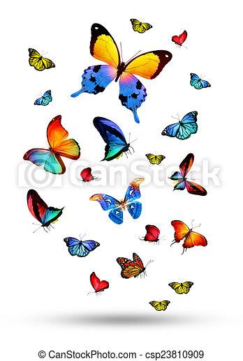 Flock de mariposas - csp23810909