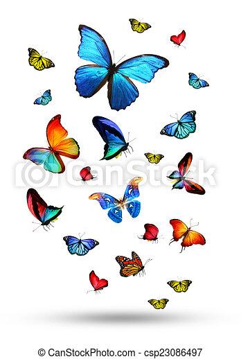 Flock de mariposas - csp23086497