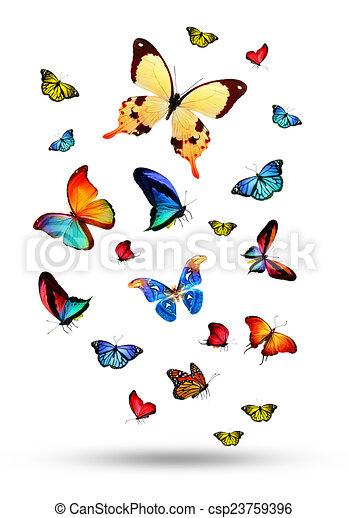Flock de mariposas - csp23759396