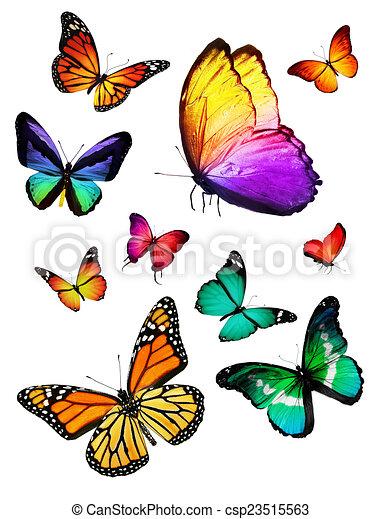 Flock de mariposas - csp23515563