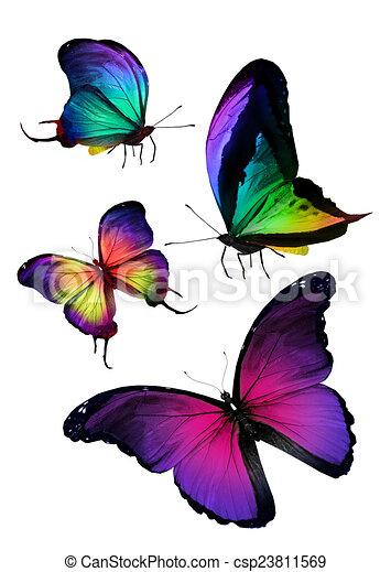 Flock de mariposas - csp23811569