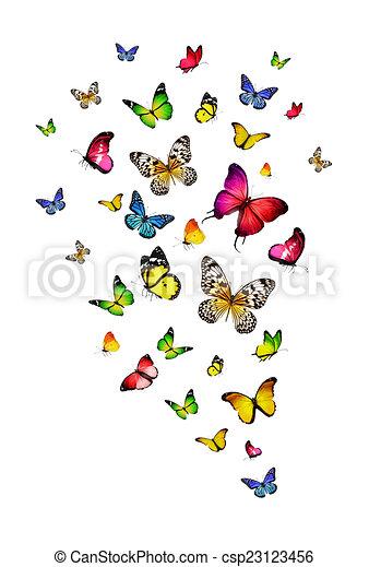 Flock de mariposas - csp23123456