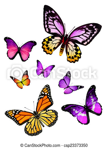 Flock de mariposas - csp23373350