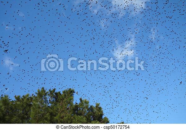 Un montón de pájaros volando - csp50172754