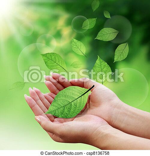 Las hojas de cuidado con la mano en el mundo - csp8136758
