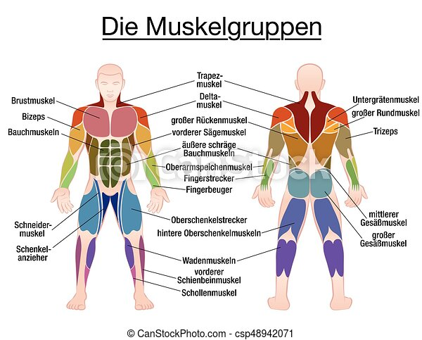 Muscle diagram german text male body muscle chart german muscle diagram german text male body csp48942071 ccuart Image collections