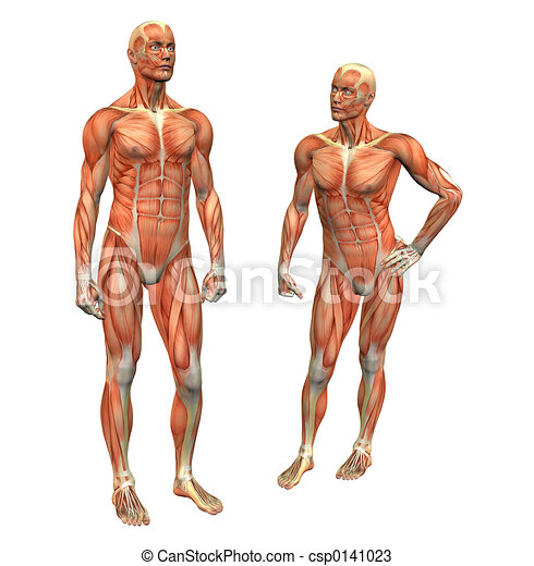 Muscle man 2 w/ clipping mask. Anatomy muscle man standing w ...