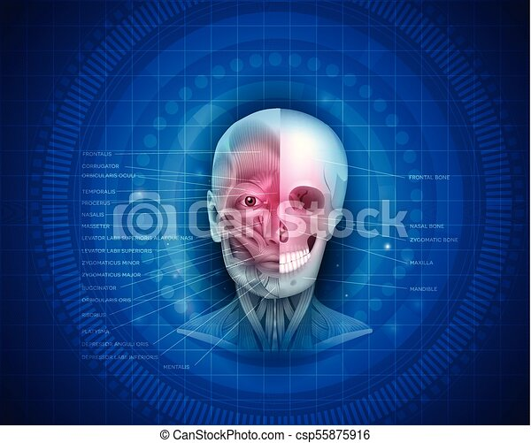 Muscles and bones of the face - csp55875916