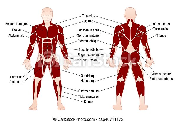 Body chart timiznceptzmusic body chart ccuart Image collections
