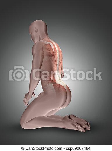 muscles, figure, dos, mis valeur, mâle, agenouillement, 3d - csp69267464