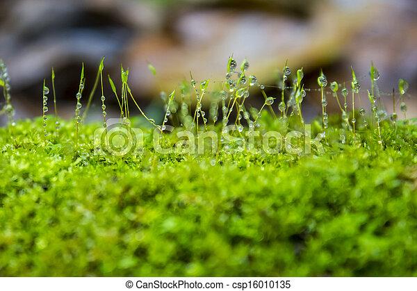 Moss - csp16010135
