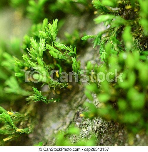 Moss - csp26540157
