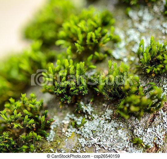 Moss - csp26540159