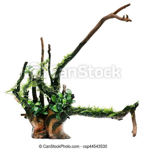 Java moss y anubias atados en bogwood - csp44543530