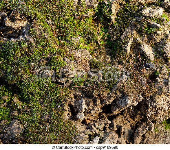 Moss en el concreto. - csp9189590