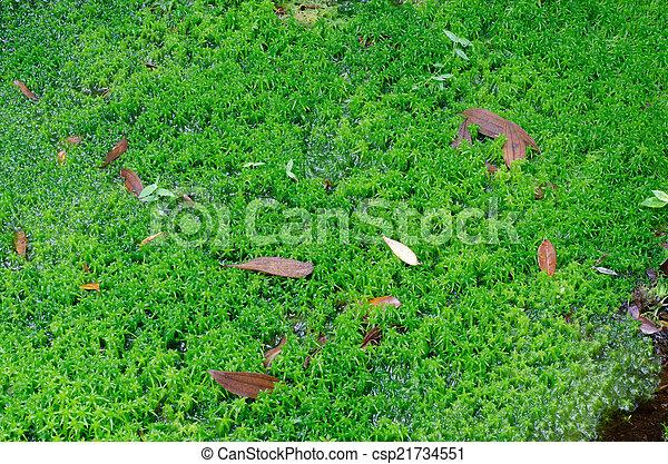 Moss de Sphagnum - csp21734551