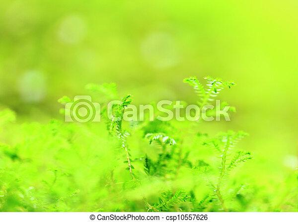 Moss - csp10557626