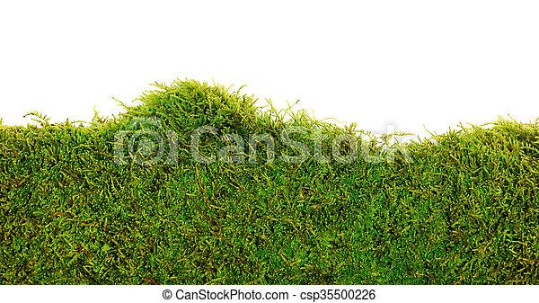 Moss - csp35500226