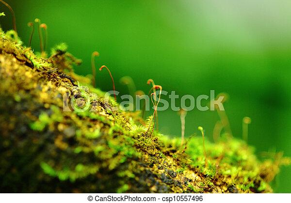 Moss - csp10557496
