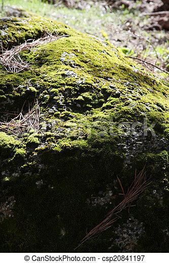 Moss - csp20841197