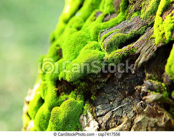 Moss - csp7417556