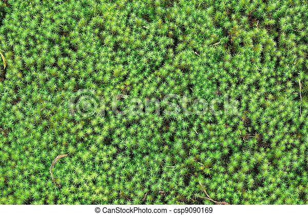 El jardín Zen musgo de fondo - csp9090169