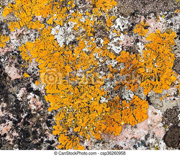 Moss en la naturaleza - csp36260958