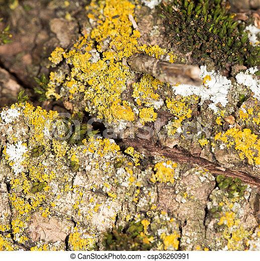 Moss en la naturaleza - csp36260991
