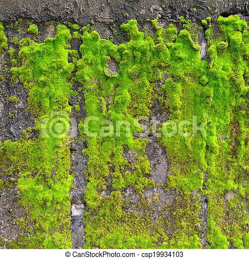 Moss en la pared - csp19934103