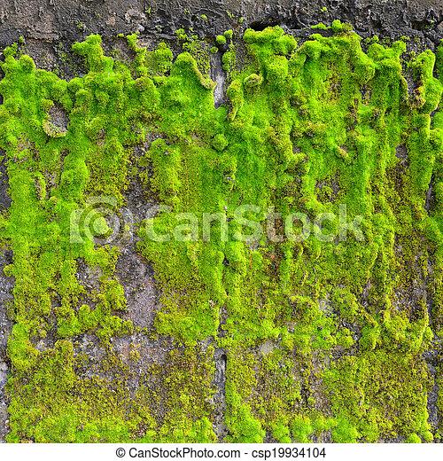 Moss en la pared - csp19934104
