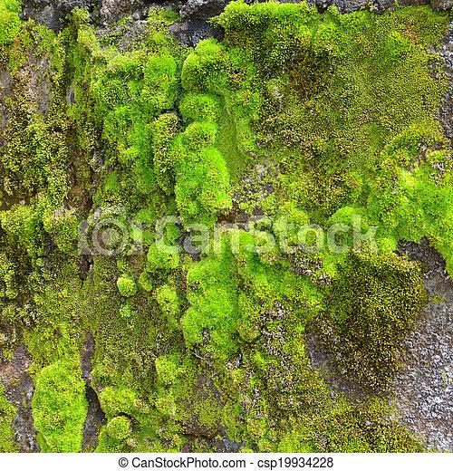 Moss en la pared - csp19934228