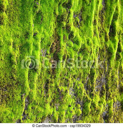 Moss en la pared - csp19934329