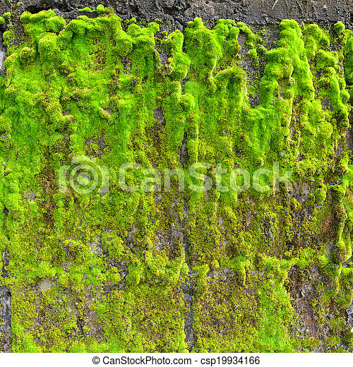 Moss en la pared - csp19934166