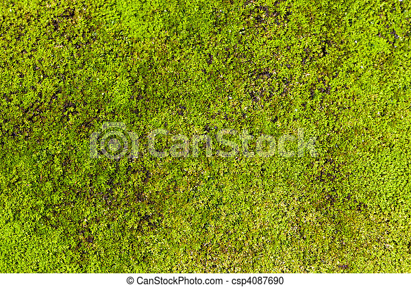 Moss de fondo - csp4087690