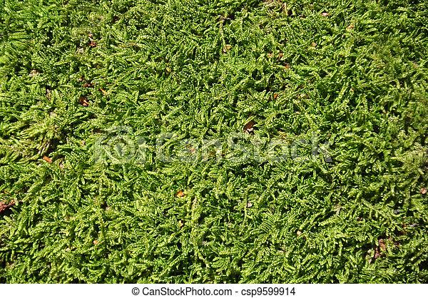 Moss de fondo - csp9599914