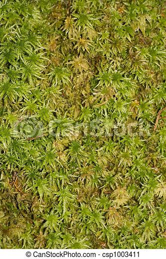 Moss de fondo - csp1003411