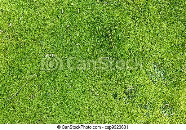 Moss de fondo - csp9323631