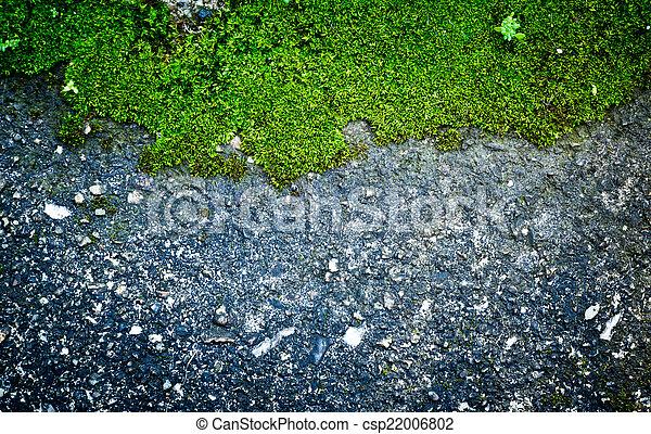 Trasfondo de musgo verde - csp22006802