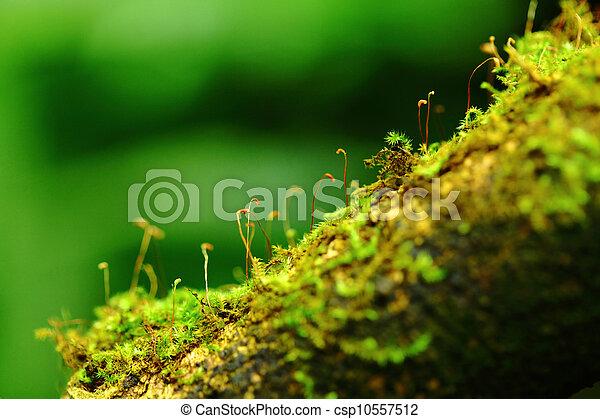 Moss - csp10557512