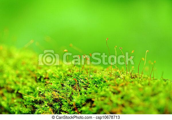 Moss - csp10678713